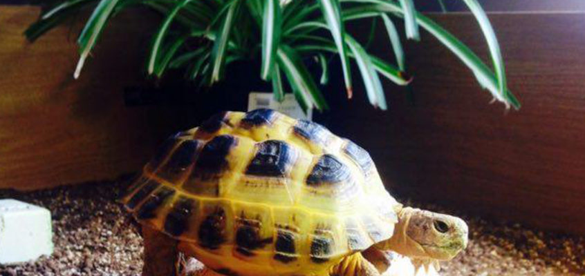 Introducing Laila and Habib, and the Brummie Tortoise