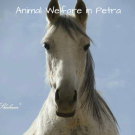 Animal Welfare in Petra